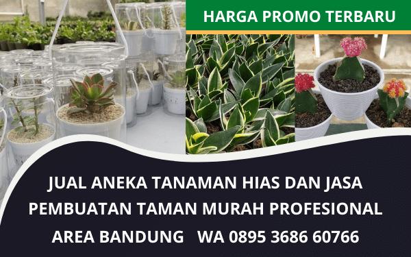 Jual Murah Tanaman Hias dan Jasa Taman Bandung