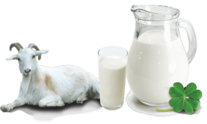 Sedia Susu Kambing Bubuk Dengan Gula Aren Murah